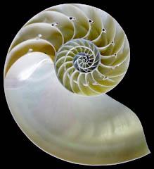 NautilusShell.jpg